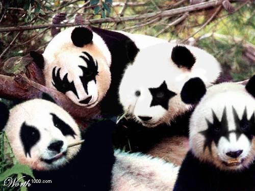Os pandas e o Kiss