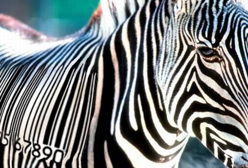 A zebra e o código de barras